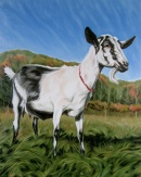 Big Picture Goat, 20 x 16