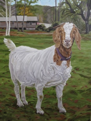 Smiling Goat, 24 x 36 sold