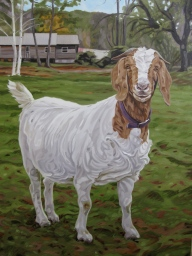 goatportrait
