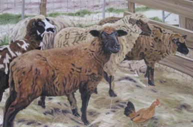 Grafton Sheep, 24 x 36