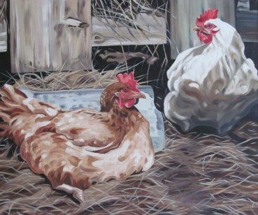 Laying Hens 30 x 36