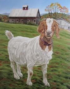Friendly Goat, 24 x 36