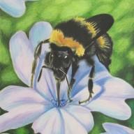 Bumblebee Flax
