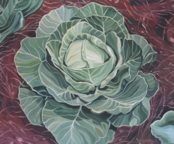 Cabbage Study