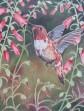 Hummingbird  Penstamon