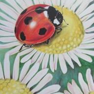 Ladybug & Daisy