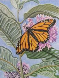 Monarch with Milkweed