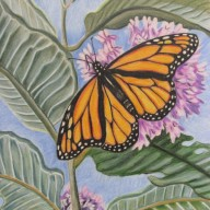 Monarch with Milkweed
