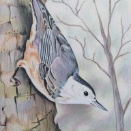 Nuthatch Tree