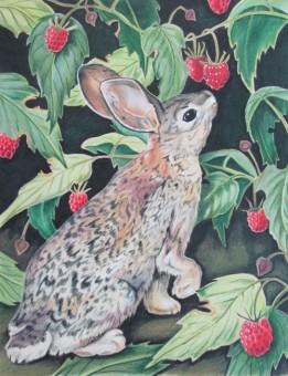 Raspberry Bunny