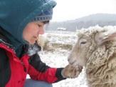 sheepw:Amywinter