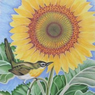 Sunflower with Warbler
