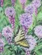 Swallowtail Liatris