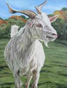 Smiling Goat II, 22 x 28