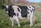 Holstein, 20x30