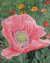 Poppy, 20 x 16