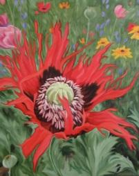 Red Poppy, 20 x 16