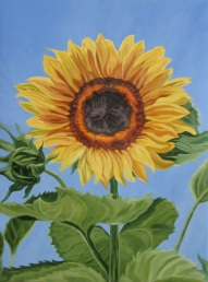 Sunflower, 20 x 16
