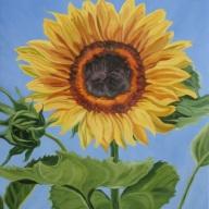 Sunflower, 20 x 16