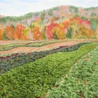 Deep Meadow Farm, 24 x 36