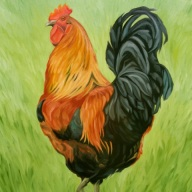 Proud Rooster, 24 X 18