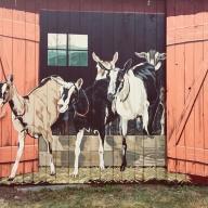 goatmuralgrafton*