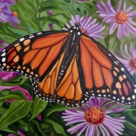 Monarch with Aster, 16 x 20 inches