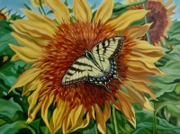 Tiger Swallowtail, 20 x 24 inches