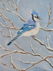 Blue Jay, 12 x 14 inches