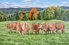 Jersey Cows, 24 x 36 inches