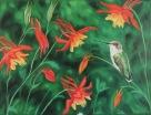 Hummingbird with Columbine, 12 x 14 inches