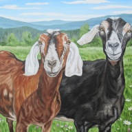Friendly Goats with Daisys, 24 x 36